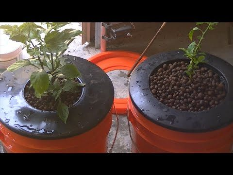 Homemade Hydroponic system, self contained with lights. update