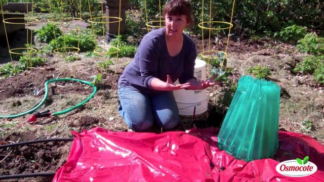 How To Plant Vegetables Early With The Wall-O-Water