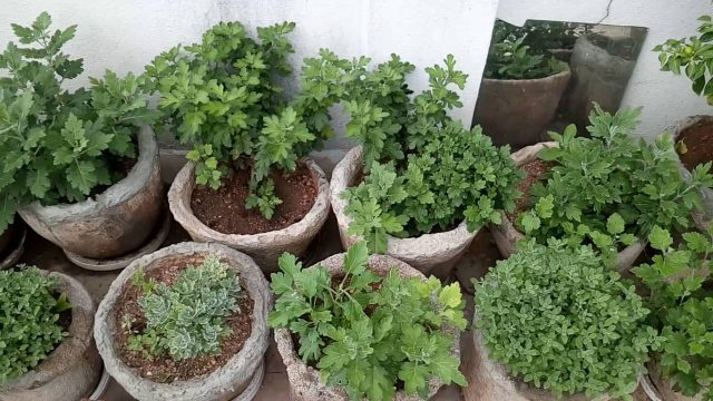 Garden at Hyderabad 2nd floor roof top