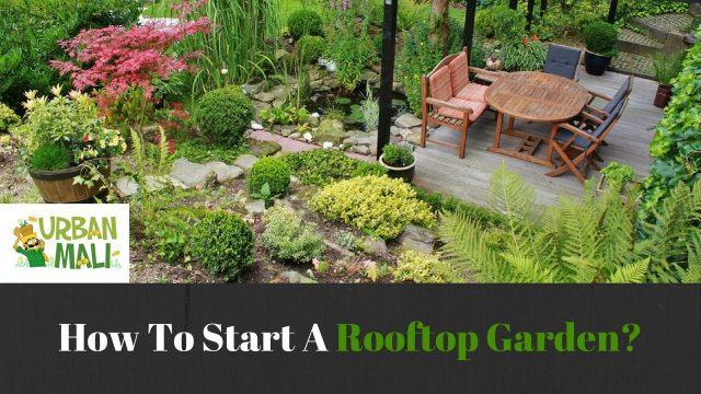 How To Start A Rooftop Garden?