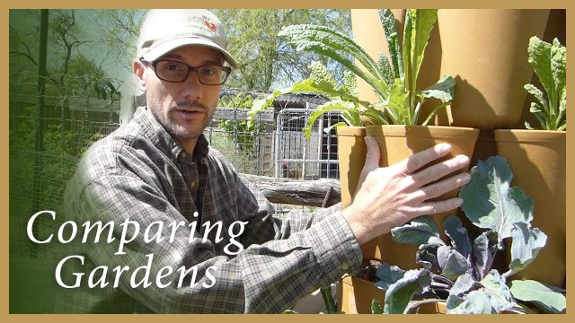 GreenStalk Garden VS. A Raised Bed