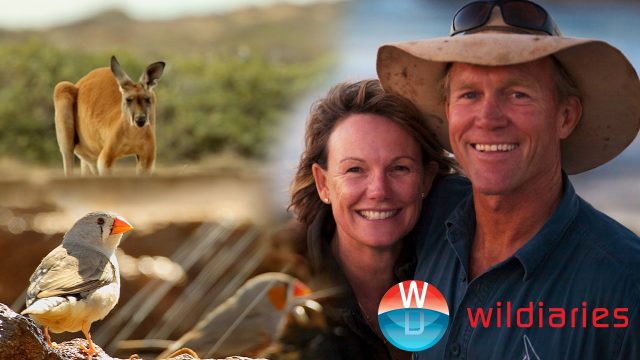 Farming Alongside Red Kangaroos on the Indian Ocean