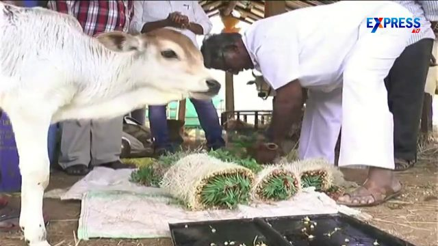 Low cost Hydroponic foddder growing system for Livestock | Paadi Pantalu – Express TV