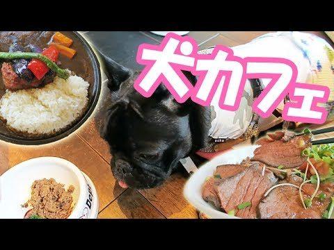 【犬カフェ】二子玉川のDOG DEPT  GARDEN CAFE行ってきた