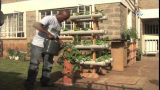 Nairobi farmer taps into potential of hydrophonics