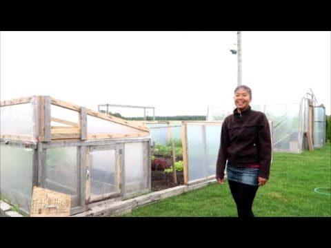 ชมผักสวนครัวที่แคนาดา container vegetable gardening