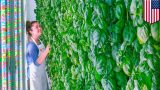 Vertical farming: Plenty receives $200 million investment from tech giants – TomoNews