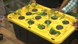Building an Inexpensive Aeroponics System