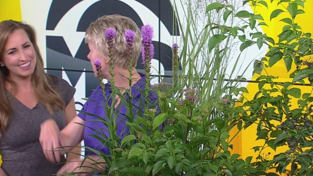 The Benefits Of Gardening With Native Minnesota Plants
