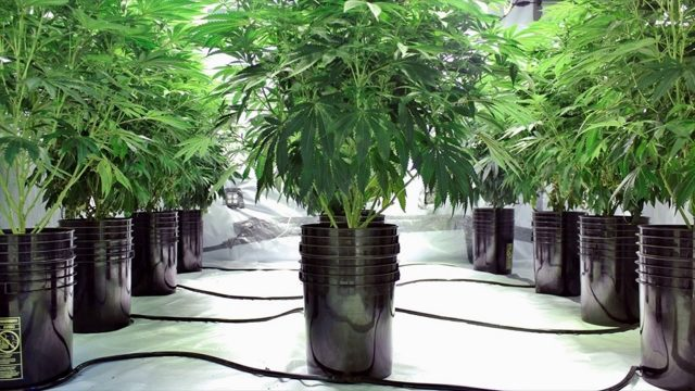 Best Advantages Of Hydroponics- Recycling, Harvesting