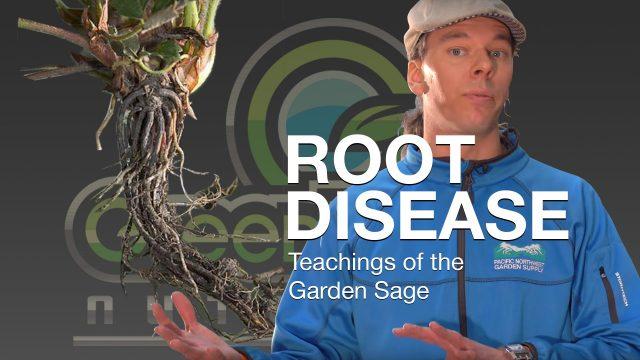 Root Disease – The Garden Sage 12