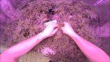 MEDICAL MARIJUANA INDOOR GARDENING! – GROW UPDATE ON 4 WEED PLANTS