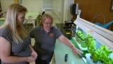 Hydroponics for the Home or Classroom