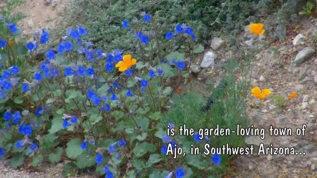 Ajo Gardens, Ajo, Arizona