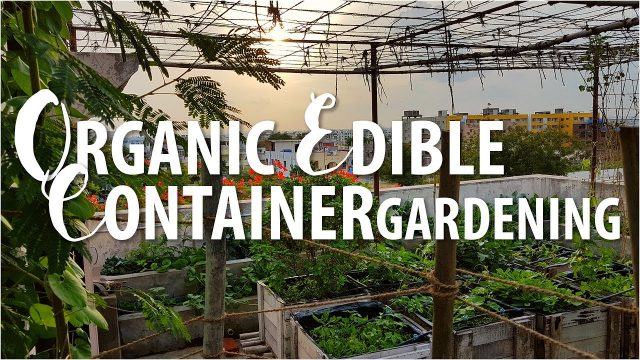 Organic Rooftop Garden (Hyderabad) – 1 (2017)