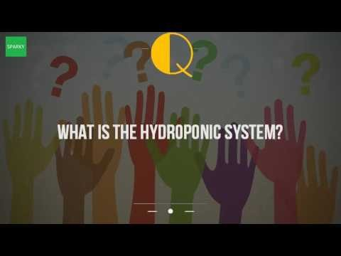 What Is The Hydroponic System?