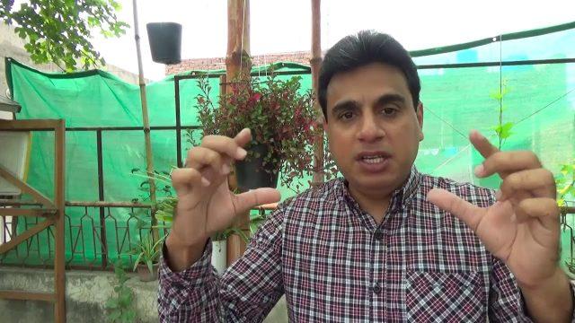 Announcements   Need Suggestion   Vegetable Garden (Urdu/hindi)
