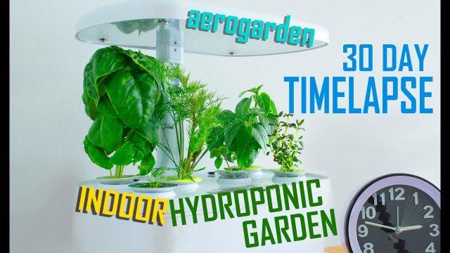 Hydroponic Garden Timelapse – Aerogarden Harvest 6 Pod – Gourmet Herb Seed Kit