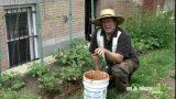 Using Mulch in Your Vegetable Garden
