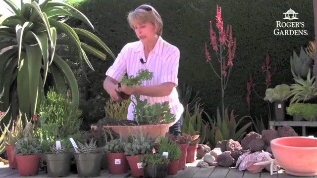 Roger's Gardens | Debra Lee Baldwin Succulents Seminar