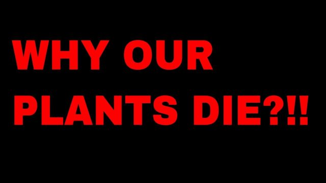 WHY OUR PLANTS DIE!!!HAMARE PLANTS KYON MAR JAATE HAIN!!