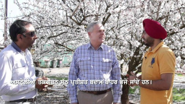 Pendu Australia Episode 11 (Almond Farming Special)