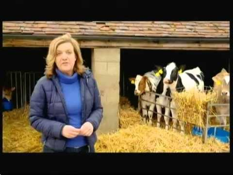 Intensive cattle farming indoors & free range milk (UK) – BBC – 3rd April 2016