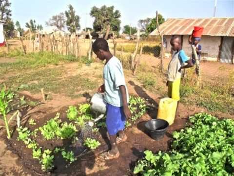 SCHOOL GARDEN IN SAMBELKUNDA (THE GAMBIA)