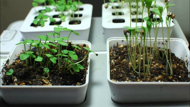 ZeroSoilGardens – Growing with the Mini Indoor Garden