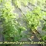Organic Gardening For Beginners – 3 Factors That Can Help Make Or Simply Break Your Garden