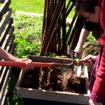 Wellspring Home Gardening Course 2012 – Sifting Compost