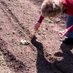 Wellspring Home Gardening Course 2012 – Planting