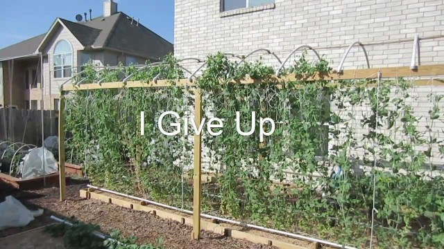 Mittleider Gardening: I Give Up, I Quit, It's Over