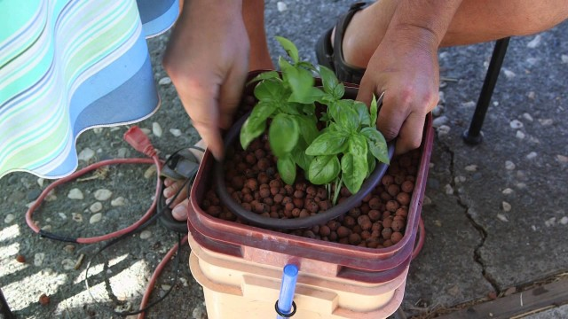 3rd Grade Science Projects on Hydroponic Gardening : Hydroponic Gardening