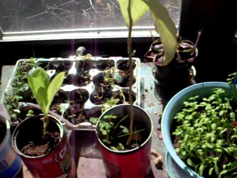 Introduction to my plants the best way to germinate seeds beginner gardening