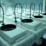 Duecrew 7500 / hydroponic system / fogponics / grow room
