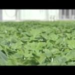Hydroponics Shop Santa Barbara CA – Urban Grow Systems