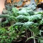 Introduction to Urban Gardening