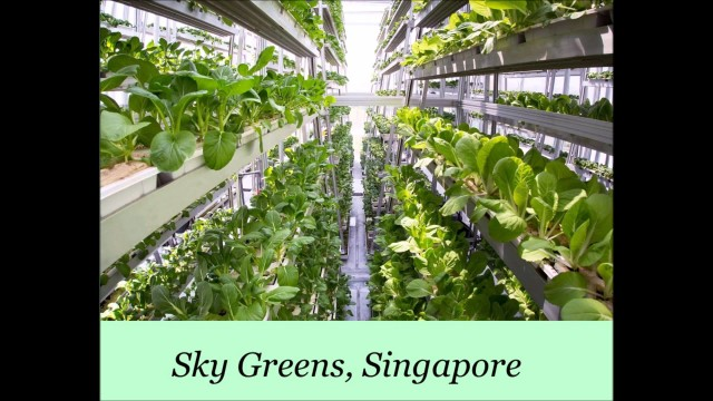 Vertical farming – happening now!