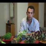 Emprendedores proponen regalar jardines verticales