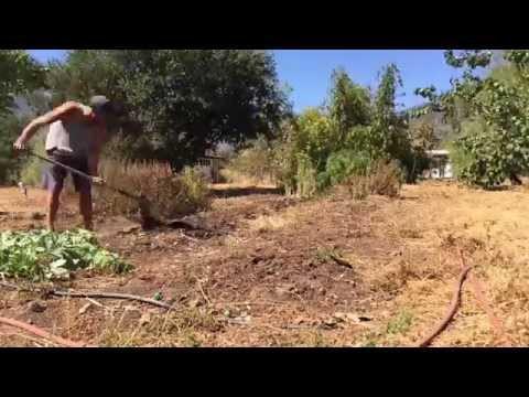 Fast Gardening