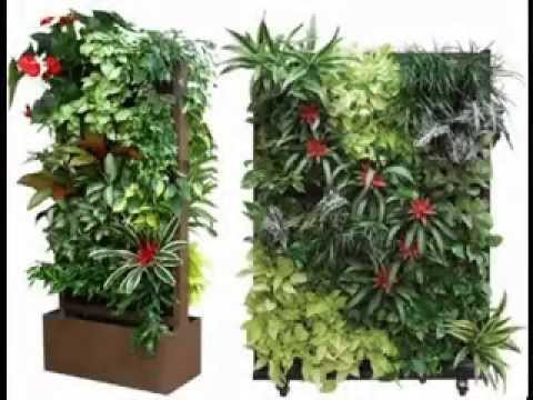 Best vertical plants ideas