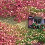 Ideas for Green Walls and Vertical Gardens Urban Gardening