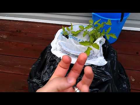 DIY SELF WATERING CONTAINER