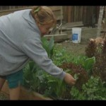 6 Hours Of Sunlight – Short Documentary On Urban Gardening