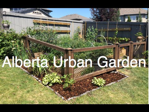 Alberta Urban Garden Frugal, Simple, Organic and Sustainable Gardening