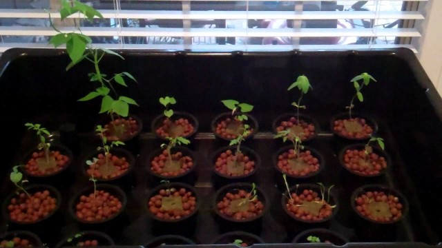 Hydroponic Setup 2012 Jan15.MP4