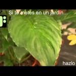 [Consejos de Jardineria] Consejo 7   Jardiner