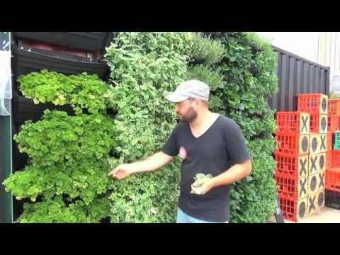 Wall Garden | Vertical Garden Installation & Operation