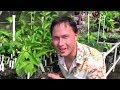 Tropical Perennial Vegetable Gardening in Hawaii